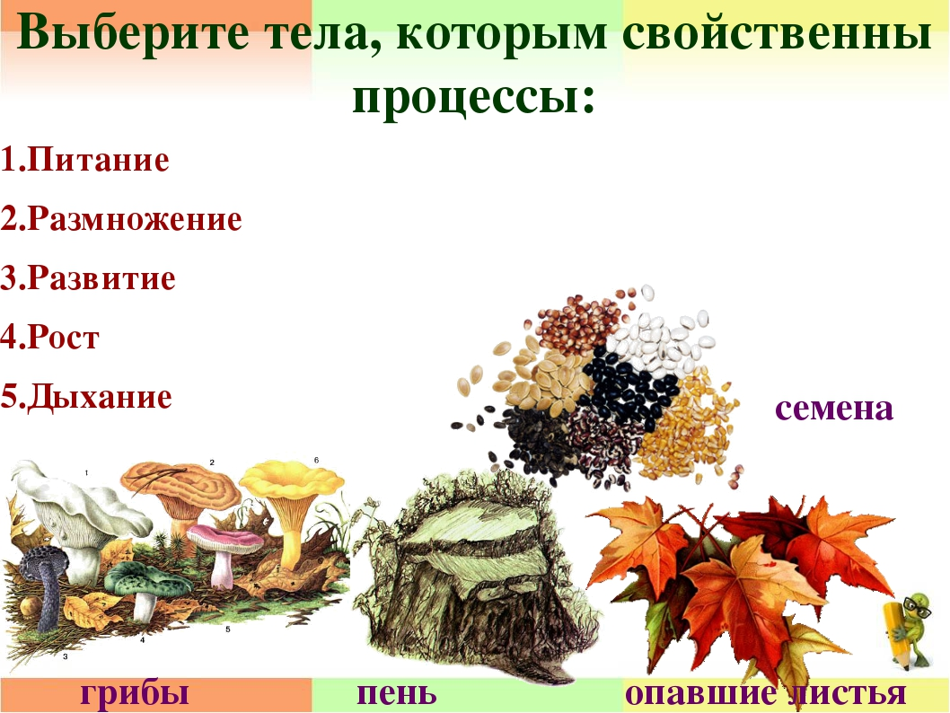 Выберите тела, которым свойственны процессы: 1.Питание 2.Размножение 3.Развит...