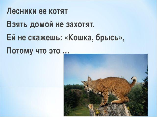 Лесники ее котят Взять домой не захотят. Ей не скажешь: «Кошка, брысь», Потом...