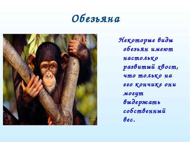 Обезьяна Некоторые виды обезьян имеют настолько развитый хвост, что только на...