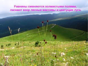 Равнины сменяются холмистыми полями, ласкают взор лесные массивы и цветущие л