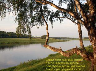 Влекут поля пшеницы спелой К себе невиданной красой Река Кубань девчушкой сме
