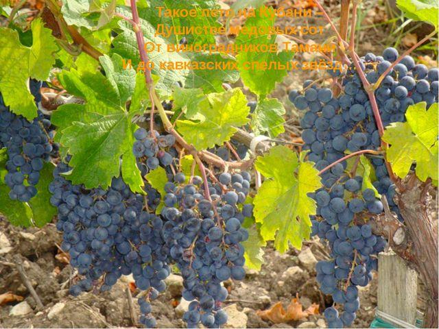 Такое лето на Кубани – Душистее медовых сот От виноградников Тамани И до кавк...