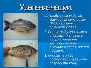 Удаление чешуи. 1.Укладываем рыбу на маркированную доску (РС), хвостом и брюш