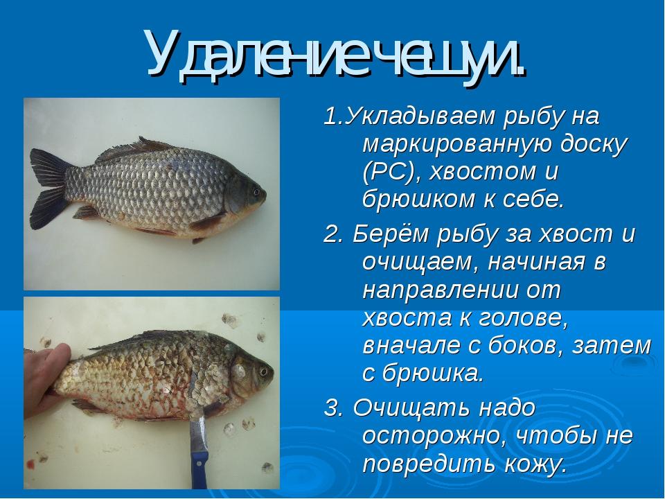 Удаление чешуи. 1.Укладываем рыбу на маркированную доску (РС), хвостом и брюш...