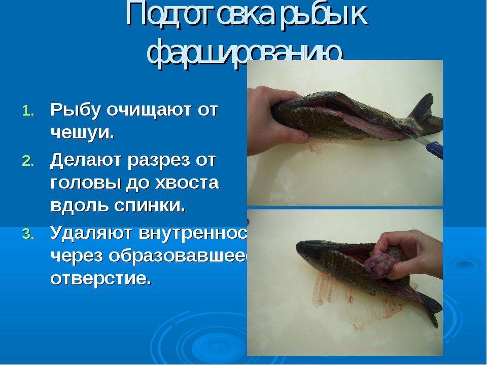 Подготовка рыбы к фаршированию. Рыбу очищают от чешуи. Делают разрез от голов...