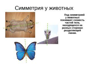 Симметрия у животных Под симметрией у животных понимают схожесть частей тела
