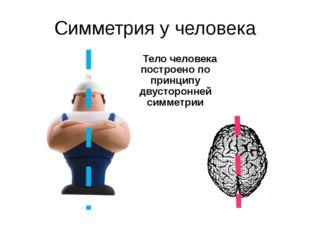 Симметрия у человека Тело человека построено по принципу двусторонней симметрии