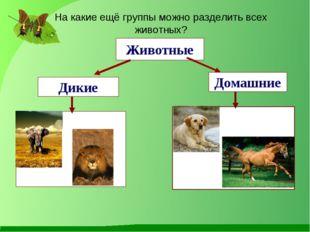 Животные Дикие Домашние На какие ещё группы можно разделить всех животных?