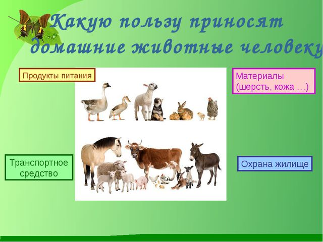 Какую пользу приносят домашние животные человеку? Продукты питания Транспорт...