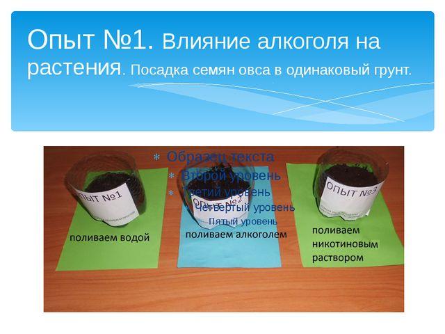 Опыт №1. Влияние алкоголя на растения. Посадка семян овса в одинаковый грунт.