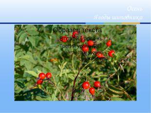 Осень Ягоды шиповника