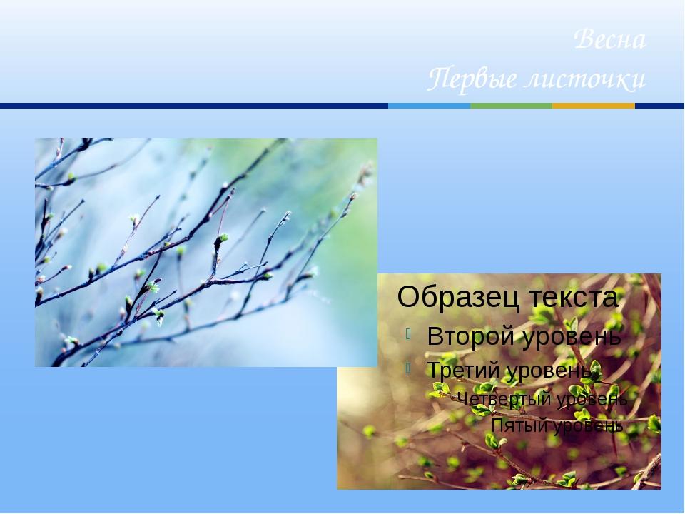 Весна Первые листочки