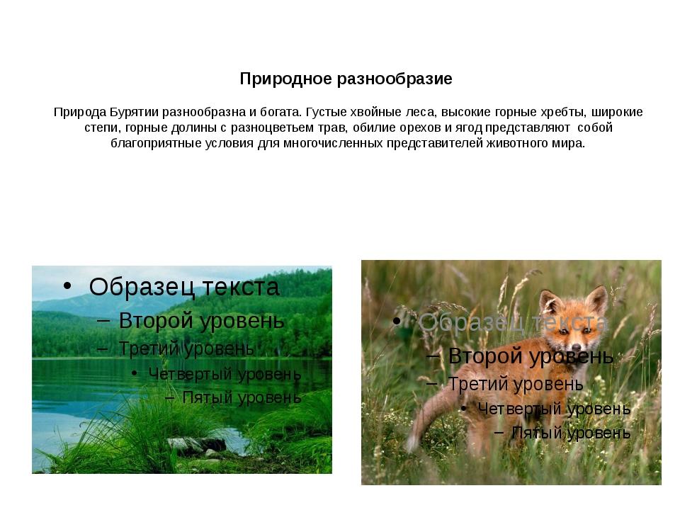 Природное разнообразие Природа Бурятии разнообразна и богата. Густые хвойные...