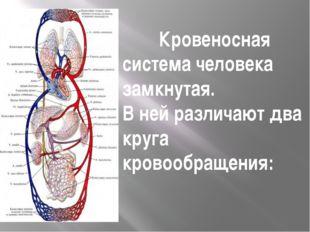 Кровеносная система человека замкнутая. В ней различают два круга кровообраще