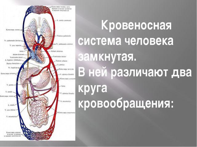 Кровеносная система человека замкнутая. В ней различают два круга кровообраще...