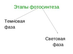 Этапы фотосинтеза Темновая фаза Световая фаза