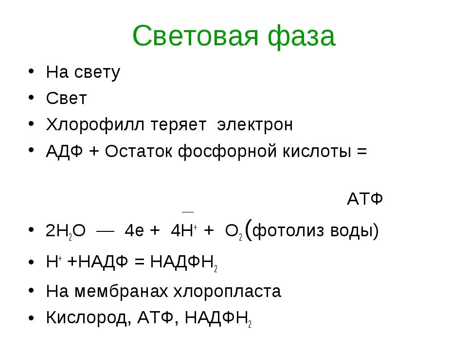 Световая фаза На свету Свет Хлорофилл теряет электрон АДФ + Остаток фосфорной...