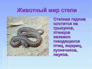 Животный мир степи Степная гадюка охотится на грызунов, птенцов наземно гнезд