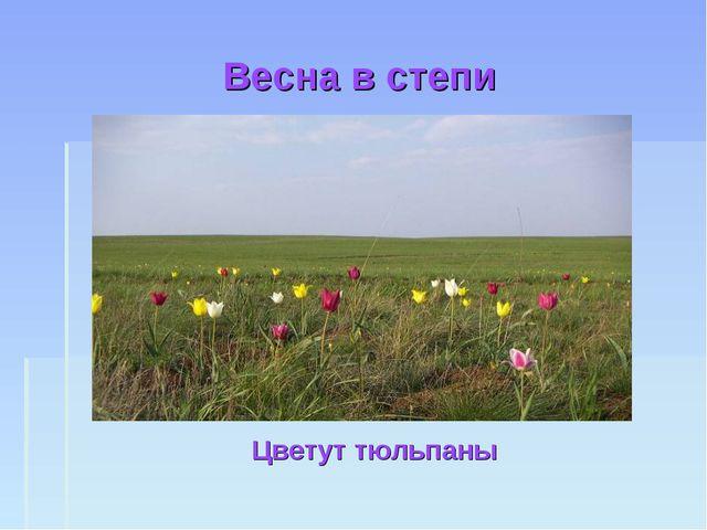 Весна в степи Цветут тюльпаны