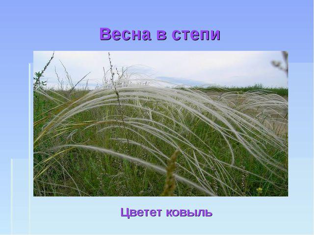 Весна в степи Цветет ковыль