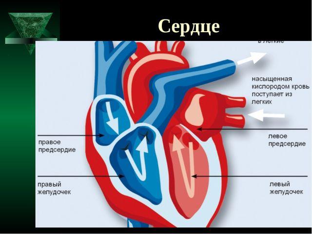 Инсульты и инфаркты презентация - Инсульт
