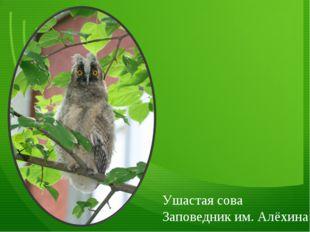 Ушастая сова Заповедник им. Алёхина