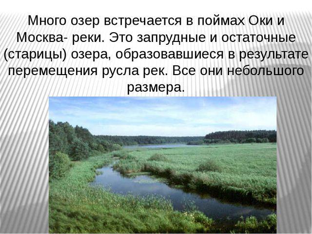 Много озер встречается в поймах Оки и Москва- реки. Это запрудные и остаточны...