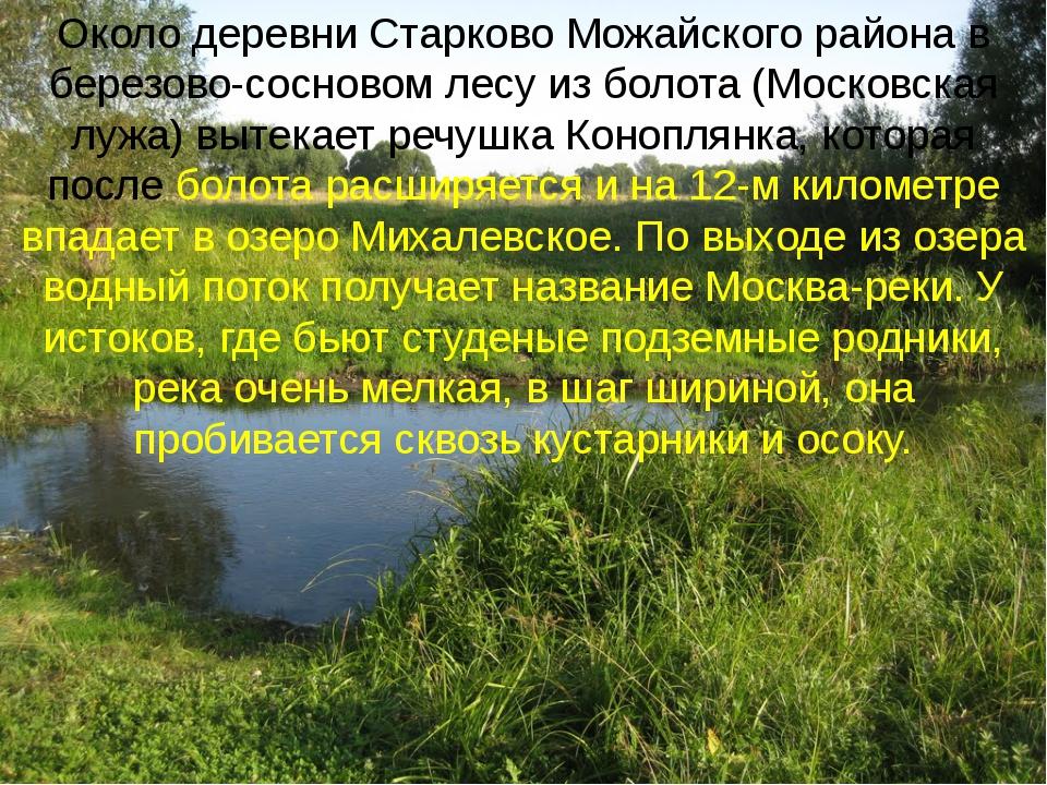 Около деревни Старково Можайского района в березово-сосновом лесу из болота (...