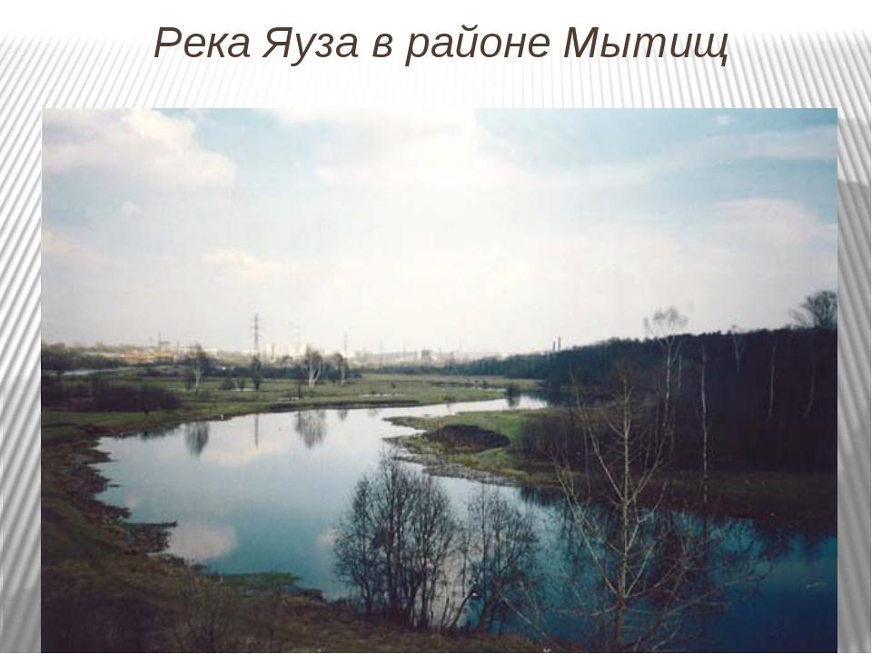 Река Яуза в районе Мытищ