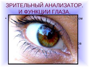 ЗРИТЕЛЬНЫЙ АНАЛИЗАТОР. И ФУНКЦИИ ГЛАЗА. Глаза- орган зрения- можно сравнить с