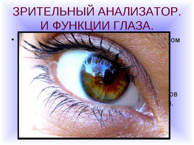 ЗРИТЕЛЬНЫЙ АНАЛИЗАТОР. И ФУНКЦИИ ГЛАЗА. Глаза- орган зрения- можно сравнить с...