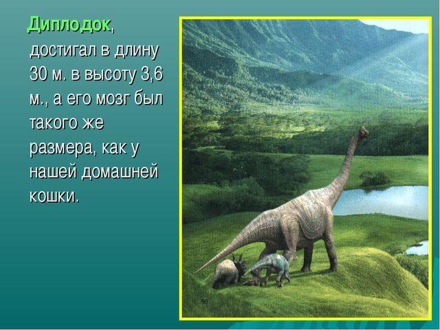 Диплодок, достигал в длину 30 м. в высоту 3,6 м., а его мозг был такого же р...