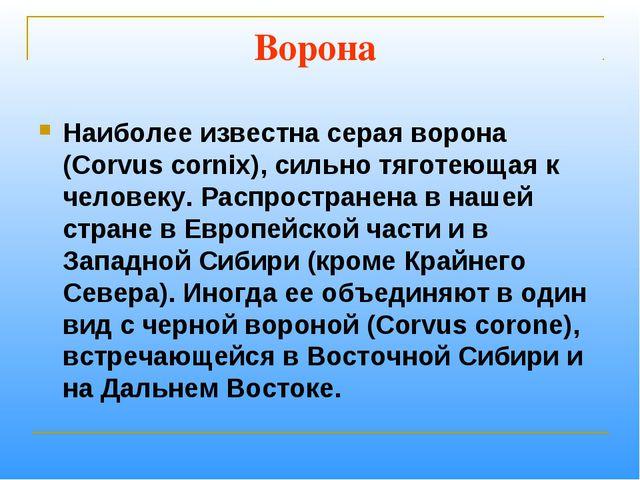 Ворона Наиболее известна серая ворона (Corvus cornix), сильно тяготеющая к че...