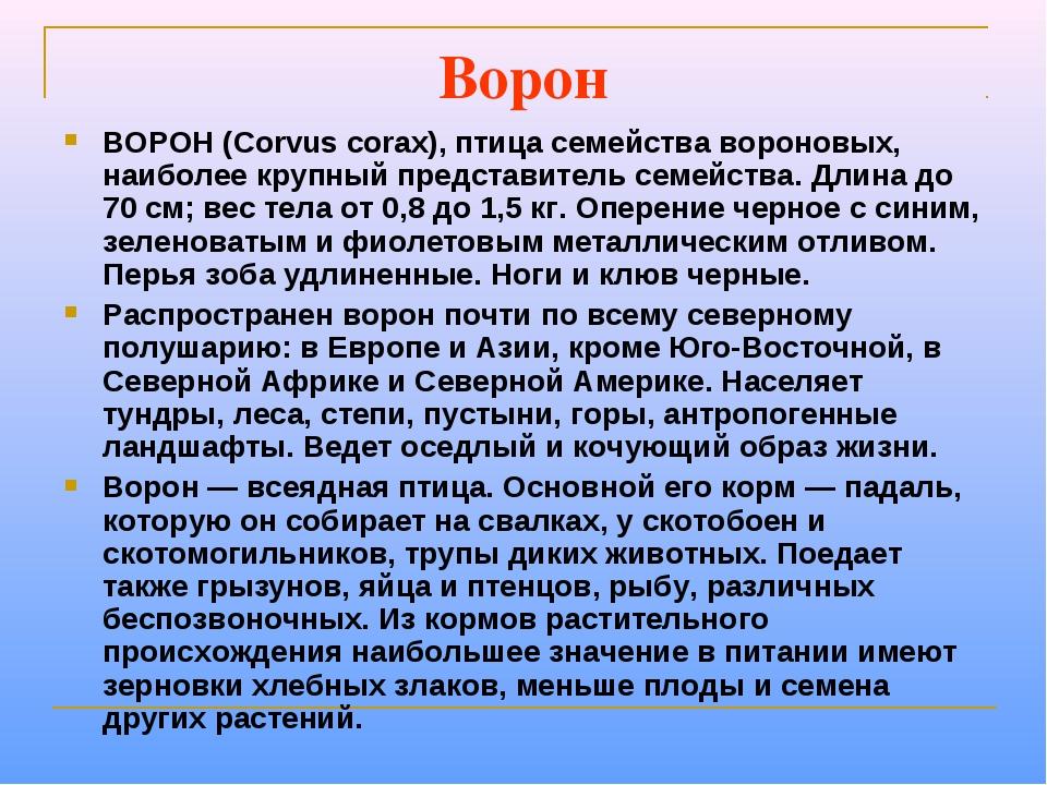 Ворон ВОРОН (Corvus corax), птица семейства вороновых, наиболее крупный предс...