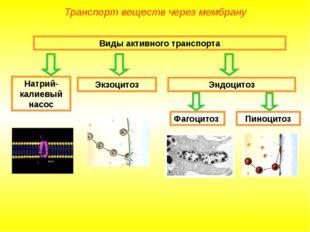 Виды активного транспорта Натрий-калиевый насос Экзоцитоз Эндоцитоз Фагоцитоз