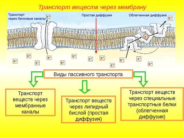 Виды пассивного транспорта Транспорт веществ через липидный бислой (простая д...