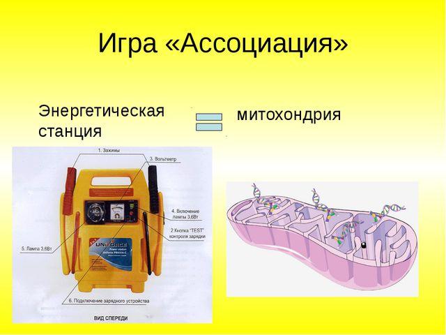 Игра «Ассоциация» Энергетическая станция митохондрия