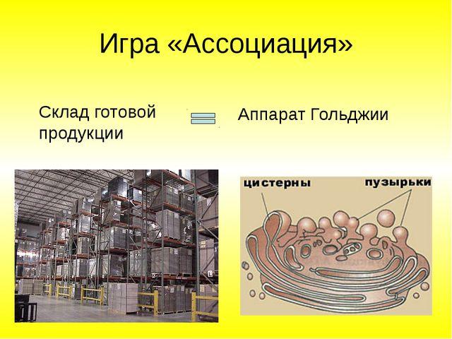 Игра «Ассоциация» Склад готовой продукции Аппарат Гольджии