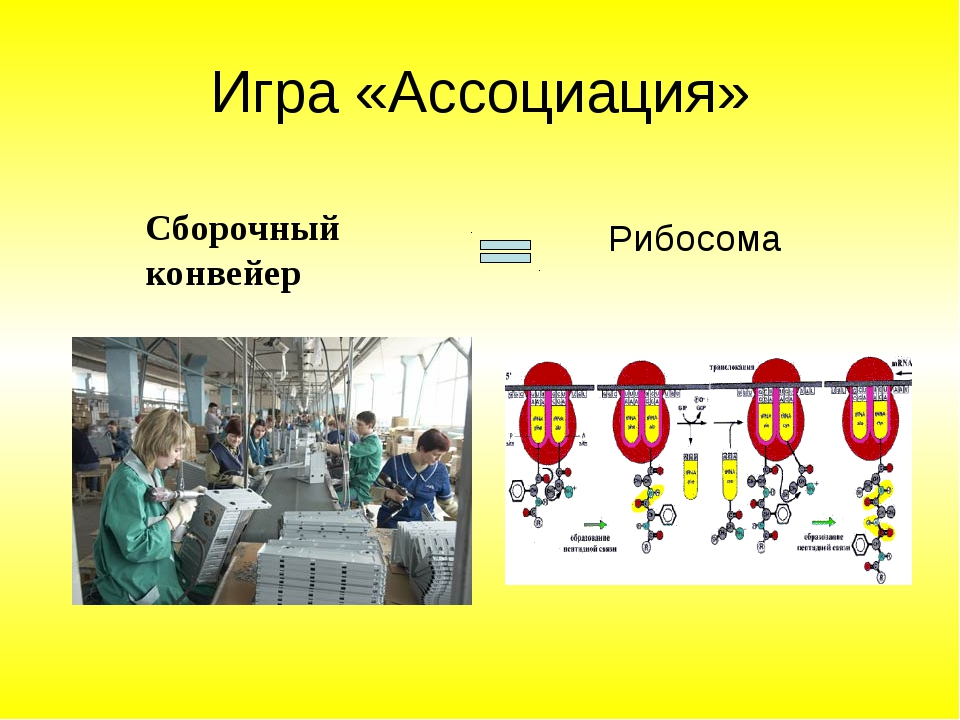 Игра «Ассоциация» Сборочный конвейер Рибосома
