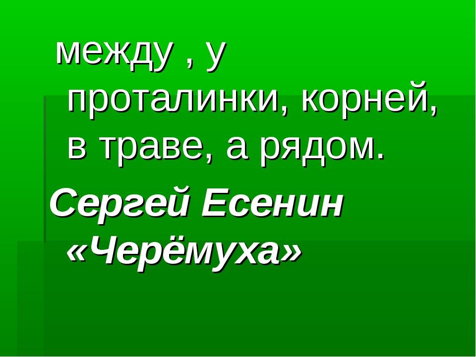 между , у проталинки, корней, в траве, а рядом. Сергей Есенин «Черёмуха»