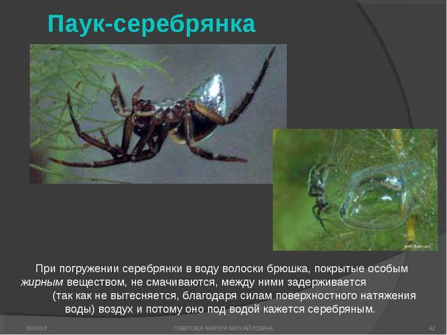 Паук-серебрянка При погружении серебрянки в воду волоски брюшка, покрытые осо...