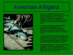 American Alligator Of the 21 crocodilian species known to science, only two a