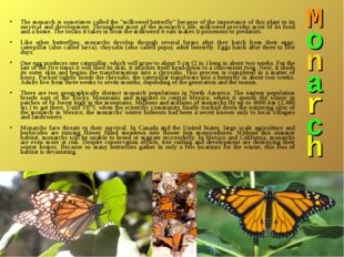 "M o n a r c h The monarch is sometimes called the ""milkweed butterfly"" becaus"
