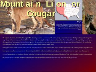 The cougar, also puma, mountain lion, or panther, depending on region, is a m