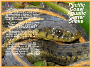 The Pacific Coast Aquatic Garter Snake is from the order Squamata. Species f