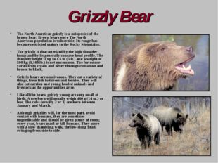Grizzly Bear The North American grizzly is a subspecies of the brown bear. Br
