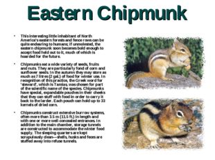 Eastern Chipmunk This interesting little inhabitant of North America's easter