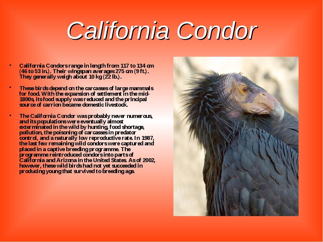 California Condor California Condors range in length from 117 to 134 cm (46 t...