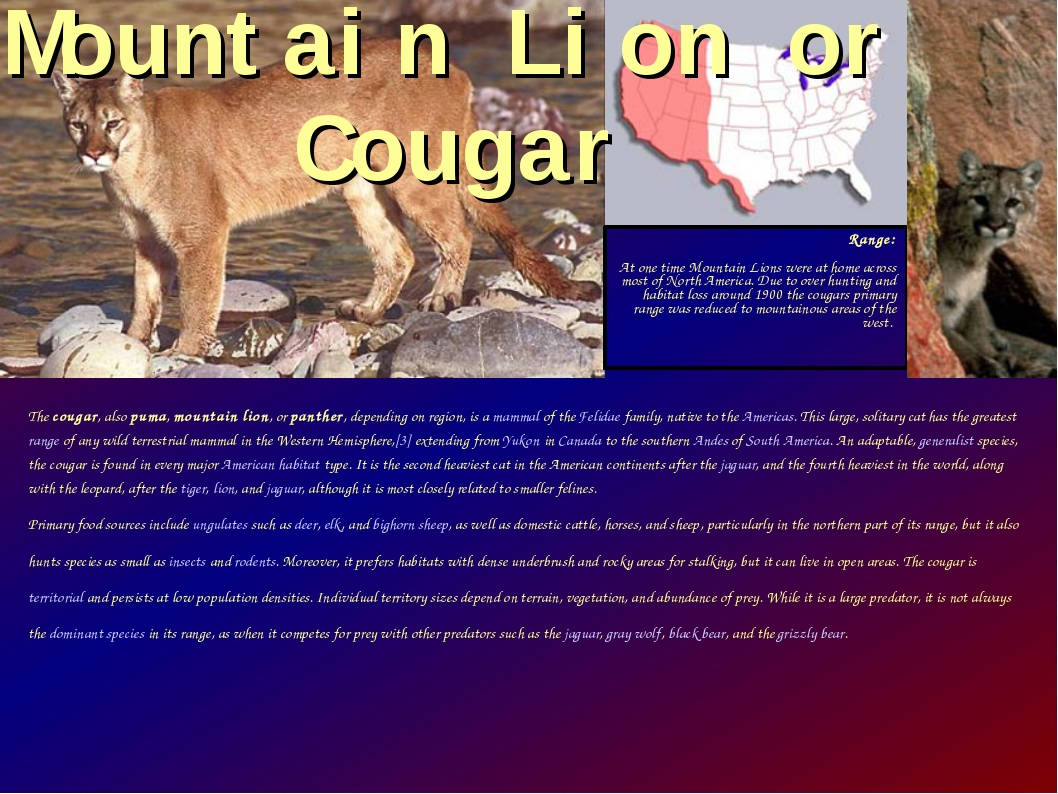 The cougar, also puma, mountain lion, or panther, depending on region, is a m...