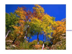Картинка, Золотые берега скачать обои для рабочего стола икартинки. http://ка